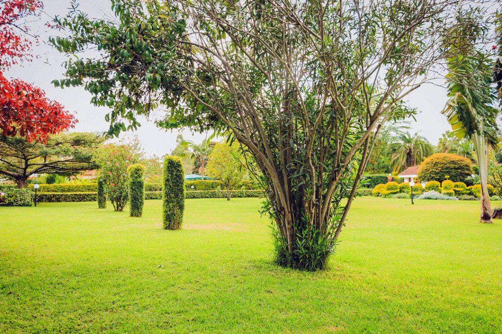 Vester Gardens Clinet Media